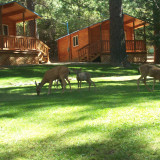 Campground wildlife and cabins Tahoe Nat Forest
