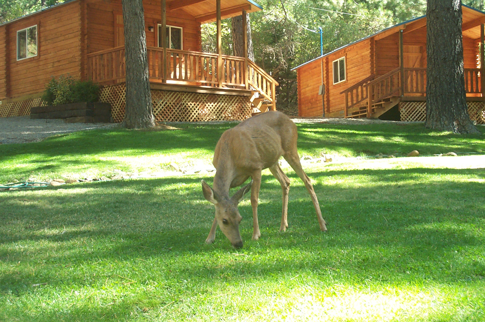 Camping cabins and wildlife